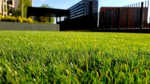 Water Your Lawn To Make It Healthy