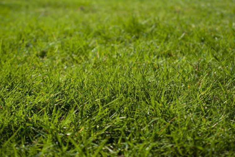Water Your Grass For A Healthy Summer Lawn